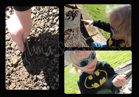 Sunny Day Bug Hunting2