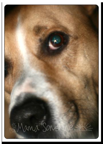 My Blitz Dog