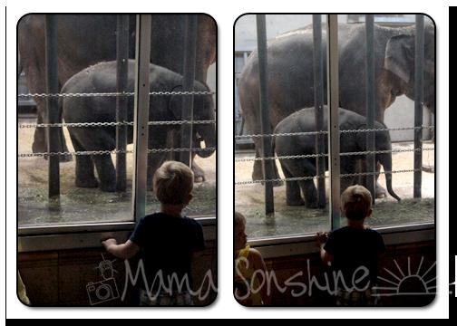 Ian and the Elephants